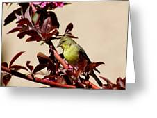 Goldfinch In Tree 031015aa Greeting Card