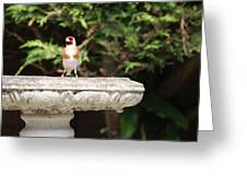 Goldfinch On Birdbath Greeting Card