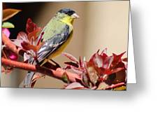 Goldfinch On Branch 031015aa Greeting Card