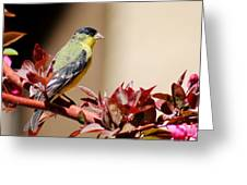 Goldfinch On Branch 031015aab Greeting Card