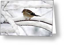 Goldfinch On Snowy Branches Greeting Card