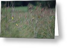 Goldfinch Party Greeting Card