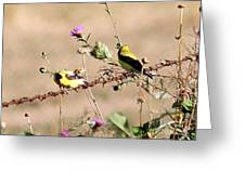 Goldfinch Quest 1 Greeting Card