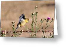 Goldfinch Quest 2 Greeting Card