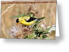 Goldfinch Quest 3 Greeting Card