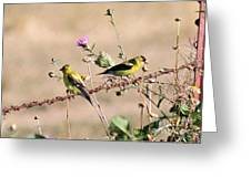 Goldfinch Quest 5 Greeting Card
