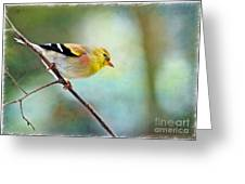 Goldfinch With Rosy Shoulder - Digital Paint IIi Greeting Card