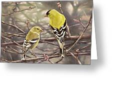 Goldfinches In The Rain Greeting Card