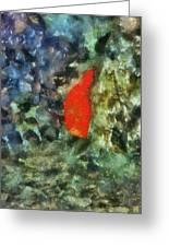 Goldfish Photo Art 05 Greeting Card