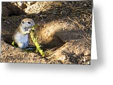 Golf Course Gopher Greeting Card