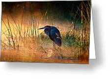 Goliath Heron With Sunrise Over Misty River Greeting Card
