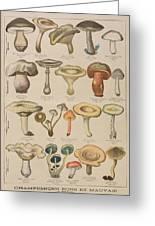 Good And Bad Mushrooms Greeting Card