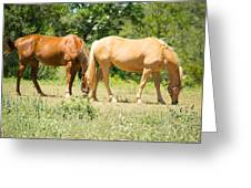 Marble Falls Texas In Good Grass Greeting Card