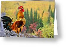 Good Morning America Greeting Card by Christine Till