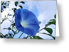 Good Morning Glory Greeting Card