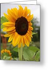 Good Morning Sunshine - Sunflower Greeting Card