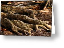 Good Roots Greeting Card by Claudette Bujold-Poirier