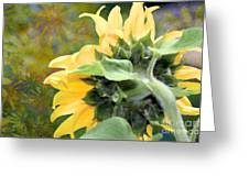 Goodmorning Sunflower Greeting Card