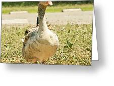 Goose Goose Greeting Card by Artist and Photographer Laura Wrede