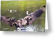 Goose Landing II Greeting Card