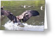 Goose Landing Iv Greeting Card