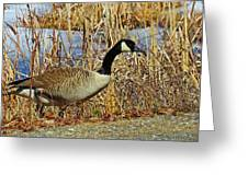 Goose On The Edge Greeting Card