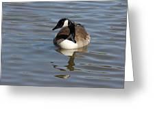 Goose Reflecting  Greeting Card