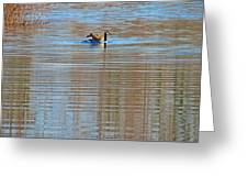 Goose Ripples Greeting Card