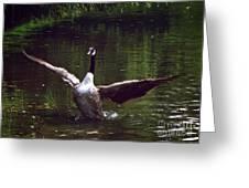 Goose Shaking Its Wings. Greeting Card
