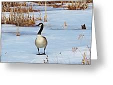 Goose Standing Greeting Card