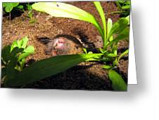 Gopher In Moms Garden Greeting Card