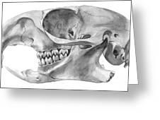 Gopher Skull Greeting Card by Jenn Tse