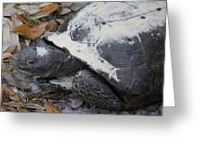 Gopher Tortoise Close Up Greeting Card