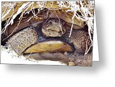 Gopher Tortoise Greeting Card