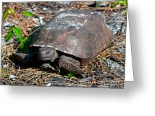 Gopher Turtle Greeting Card