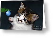 Gorgeous Christmas Kitten Greeting Card