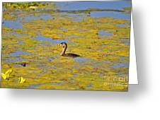 Gorgeous Grebe Greeting Card