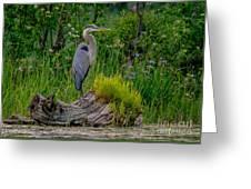 Gorgeous Heron Greeting Card