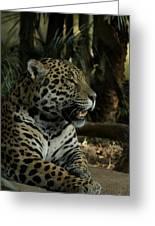 Gorgeous Jaguar Greeting Card