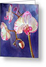 Gorgeous Orchid Greeting Card