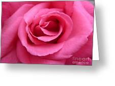 Gorgeous Pink Rose Greeting Card