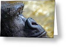 Gorilla Contemplating Greeting Card