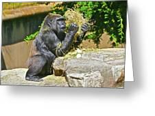 Gorilla Eats Greeting Card