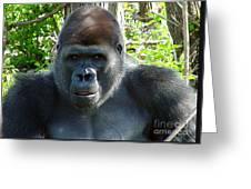 Gorilla Headshot Greeting Card