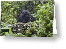 Gorilla In Our Midst Greeting Card