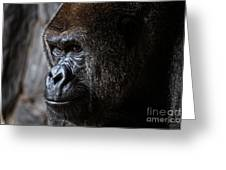 Gorilla In Thought Greeting Card