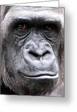 Gorilla - Jackie Greeting Card