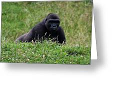 Gorilla On The Hunt Greeting Card