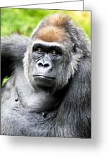 Gorilla Pose Greeting Card