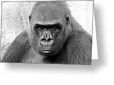 Gorilla White Background Greeting Card